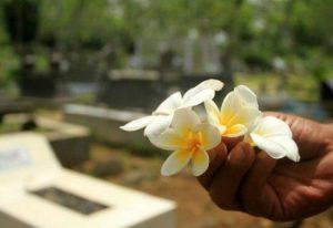 Apa Hubungan Pohon Kamboja dan Kuburan?