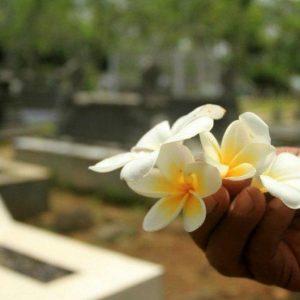 Read more about the article Apa Hubungan Pohon Kamboja dan Kuburan?
